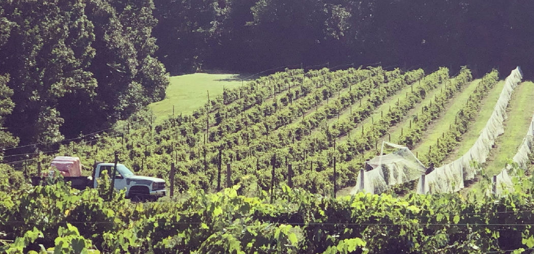 A family owned winery in Tennessee now flourishes thanks to access to rural broadband.